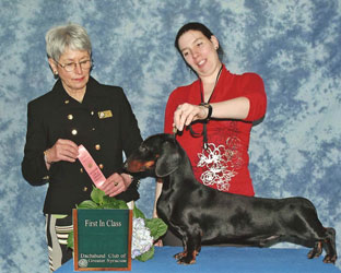 Ch Mylo First in Class, Dachshund of Greater Syracuse
